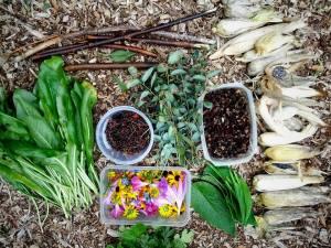 9 MOP eco-print harvest