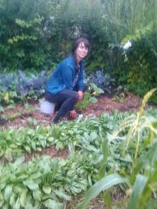 harvesting woad
